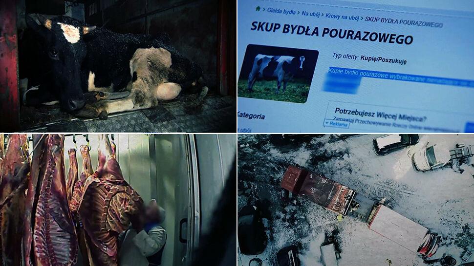 """Zmowa w mięsnym biznesie. """"Superwizjer"""" TVN: sprzedaż chorego mięsa to norma"""
