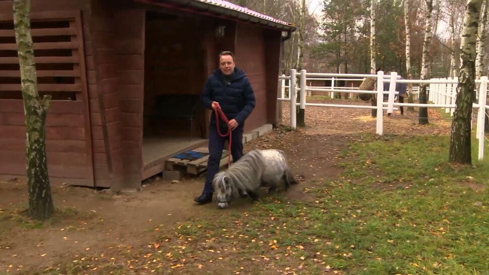 Najmniejszy koń świata mieszka w Łodzi