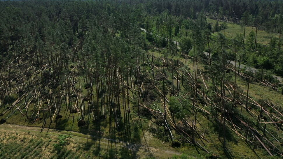 Awarie prądu, powalone drzewa, setki interwencji. Bilans burz nad Polską