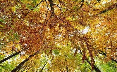 31.10.2015 | Jaka pogoda na Wszystkich Świętych i Dzień Zaduszny?