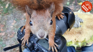 Odważna wiewiórka zawędrowała na szczyt. Wybraliście materiał września