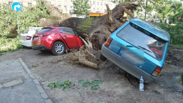 Drzewa na samochodach  Mateusz Szmelter/ tvnwarszawa.pl