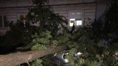 Drzewo spadło na jadący samochód (bolec.info)