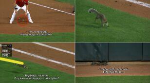 Superszybka wiewiórka. Wbiegła na boisko i rozproszyła baseballistów