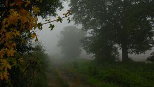 Gęste mgły. Ostrzeżenia IMGW w połowie kraju