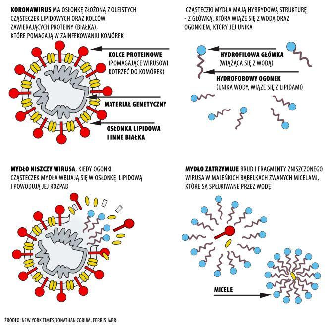 W jaki sposób mydło niszczy koronawirusa? (tvnmeteo.pl za NYT/Jonathan Corum and Ferris Jabr)