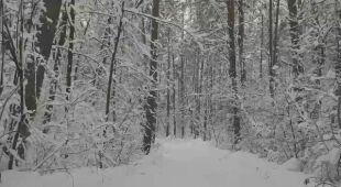 Zimowe krajobrazy na Podlasiu